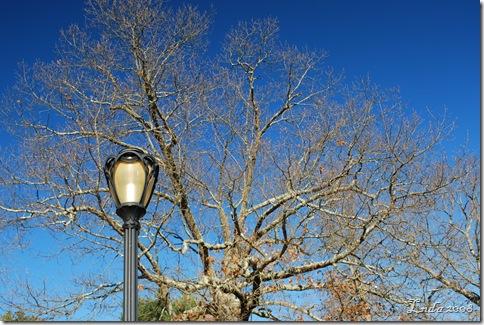 Tree & Lamp
