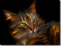 burningcat_1280x960