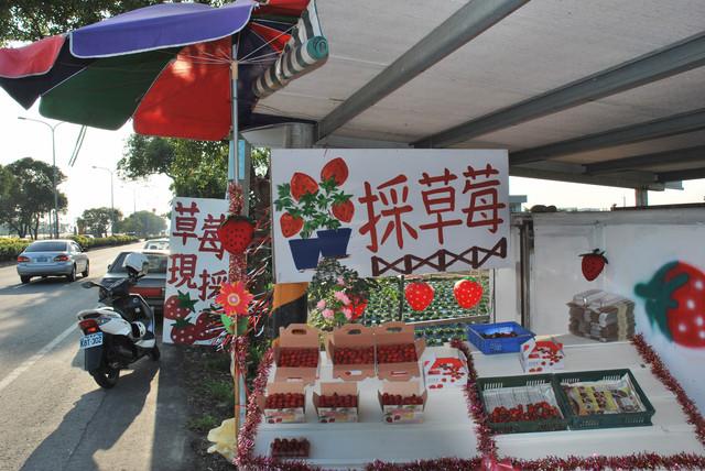 雲林也有草莓《林內-林北村草莓園區》親子現採草莓遊記, 省道台3線往竹山或二水方向喔!!