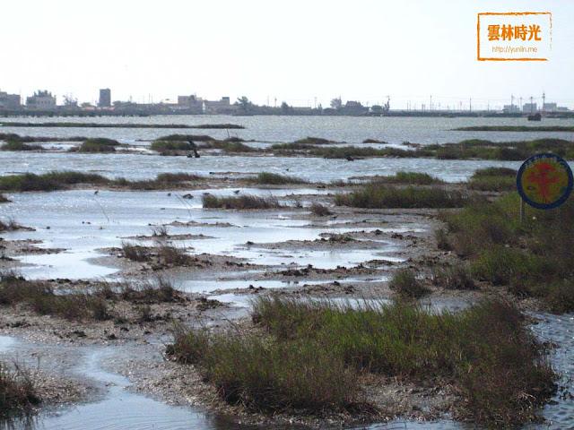 """口湖-成龍溼地遊記, 另有夕陽景觀公園是 """"侯鳥來的季節""""重要場景!"""