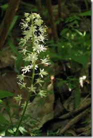 white bloom3673