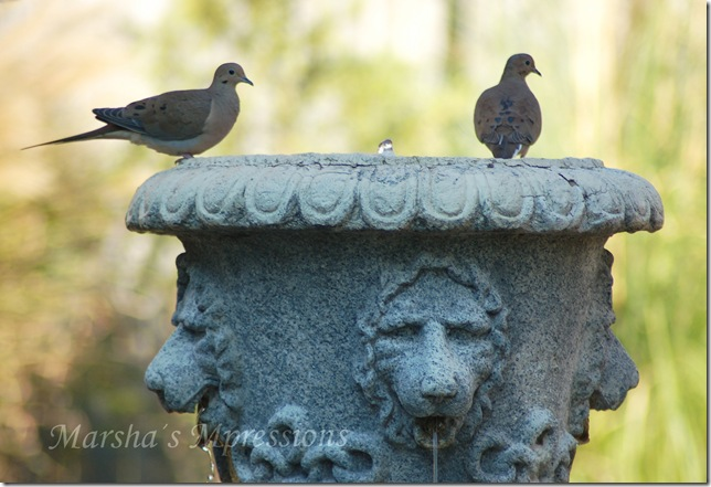 two doves w watermark
