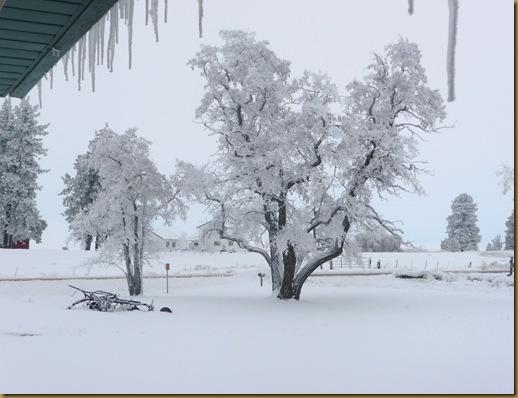 2010 snow 011