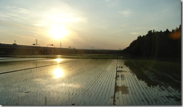 DSC01879 campos de arroz
