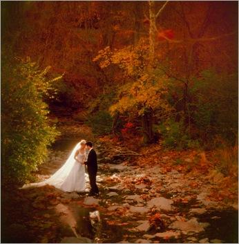 Autumn's Amber Glow - 2115