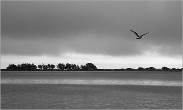 WindsweptIMG_1022