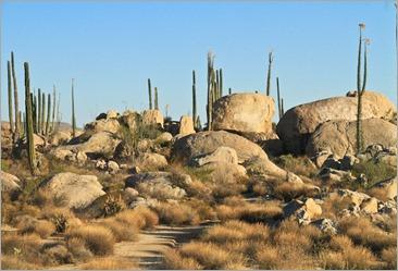 Baja Rocks