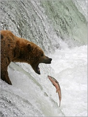 Bear and Fish - Fotolia_14912627_Subscription_L[1]