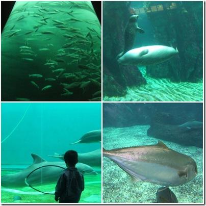 Aj all'acquario di Genova