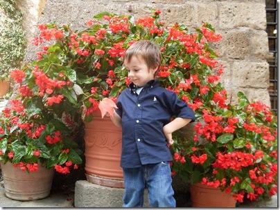 Fiori colorati alla Civita