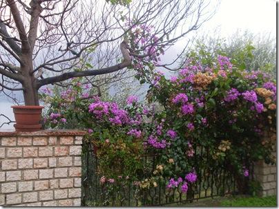 Il giardino di Villa Margherita a Limone