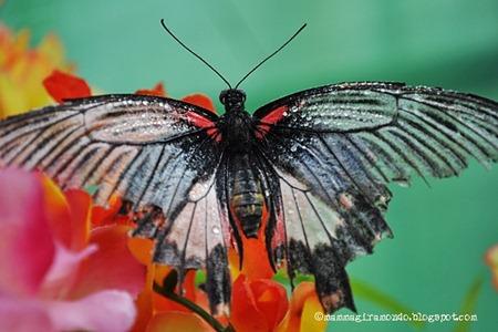casa delle farfalleDSC_1097
