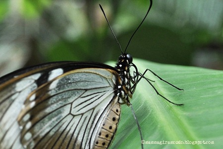 casa delle farfalle (3)