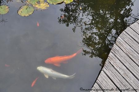 giardino castel rundeggDSC_1224