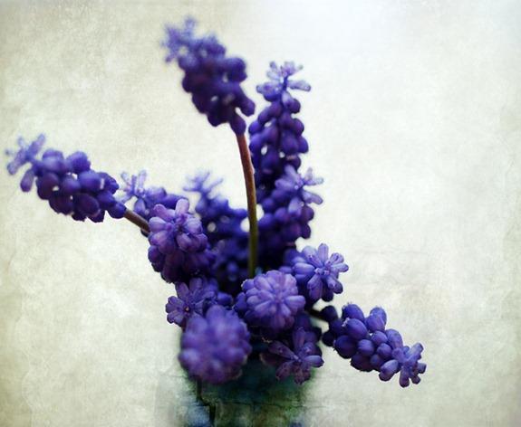 FLOWERS DSC_0129 copy 2
