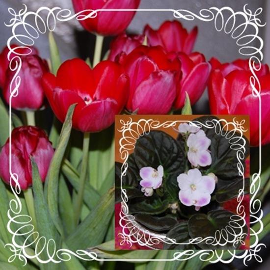 Morsdag blomster