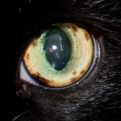 Пятнышко на глазу у кота
