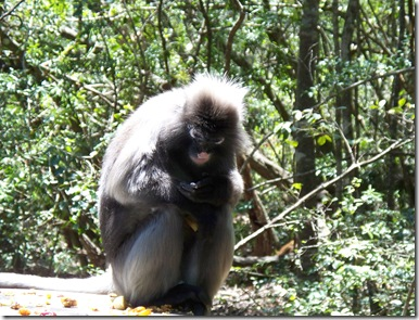12-03-2009 047 Monkeyland