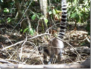 12-03-2009 052 Monkeyland