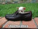 shoepuppy