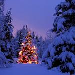 Joyful Season.jpg