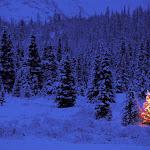 Apline Glow, Summit Lake, Alaska.jpg