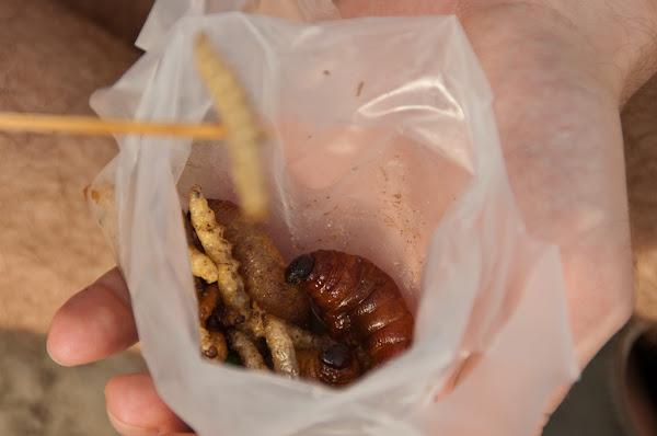 Как мы ели гусениц