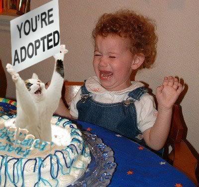 http://lh4.ggpht.com/_BRMr2D3unLI/S9BiZIXvDMI/AAAAAAAAAL4/PpPtfoEh3k8/s800/BirthdayCakeYoureAdopted.jpg