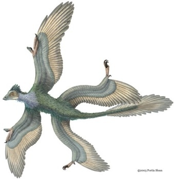 microraptor_3_-tm