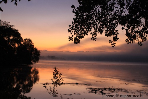 IMG_7875 Morning Arises