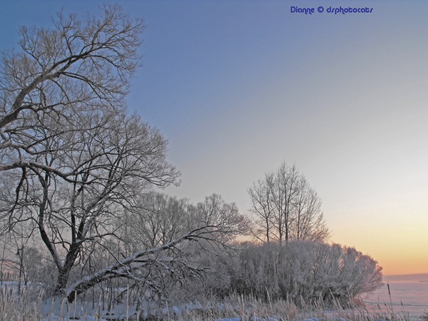 A Winter's Morning Down By The Bay Of Quinte