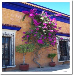 More Bougainvillea