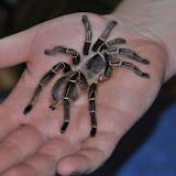 Spinne-auf-Hand-a19099449.jpg