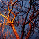 Baum im Licht.jpg