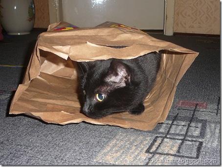 kot i torba