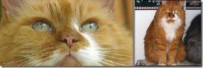 najstarszy_kot