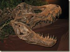 Dinosaur Museum 02