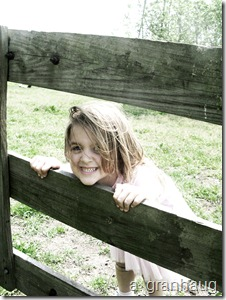 Klara fence