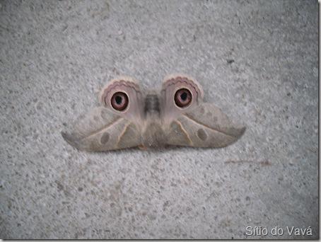mariposa de asas abertas