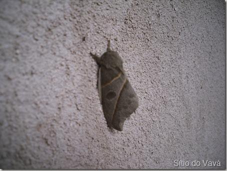mariposa de asas fechadas