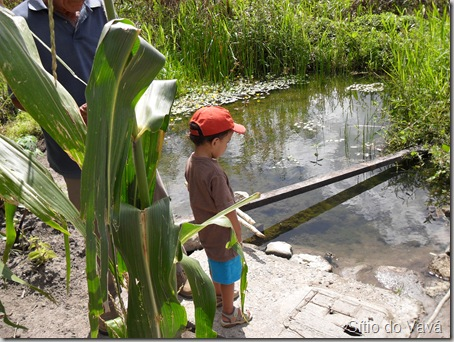 plantando milho