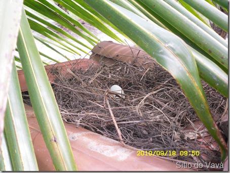 O primeiro ovo da Pedrês