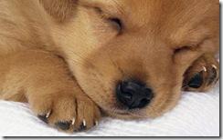 cucciolo_cane