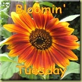 BloomingTuesday_Button