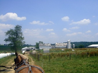 Amish farm from a wagon ride