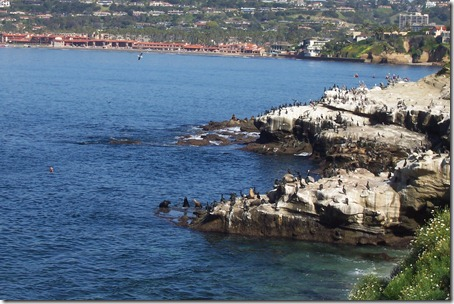 San Diego Beaches 077