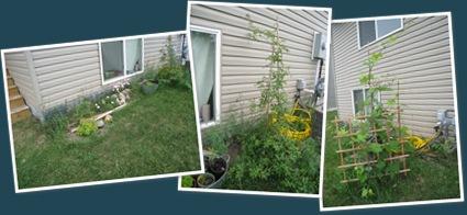 View my garden 2