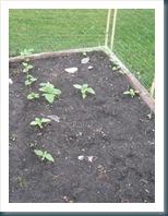 june 24 garden WEB-11