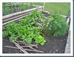 june 24 garden WEB-12