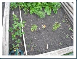 june 24 garden WEB-14